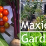 Maxies Garden Polaroid