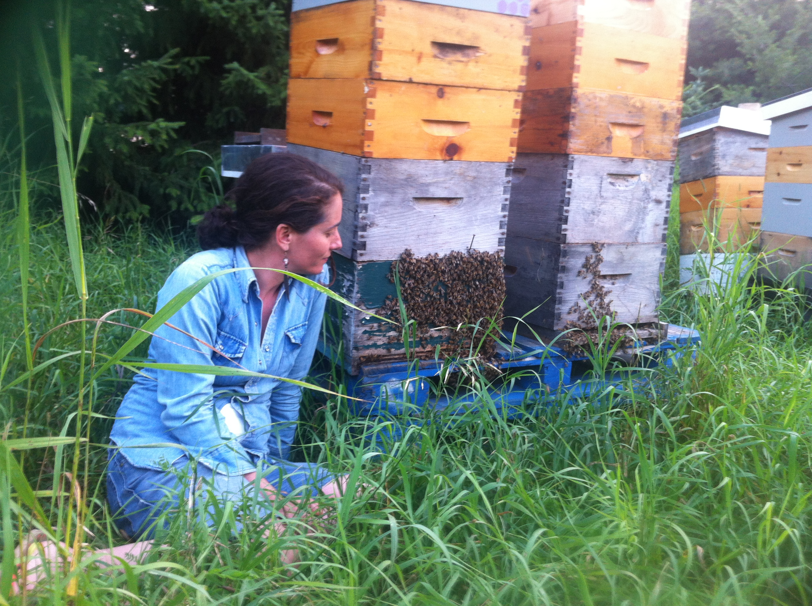 reflections from a jewish beekeeper