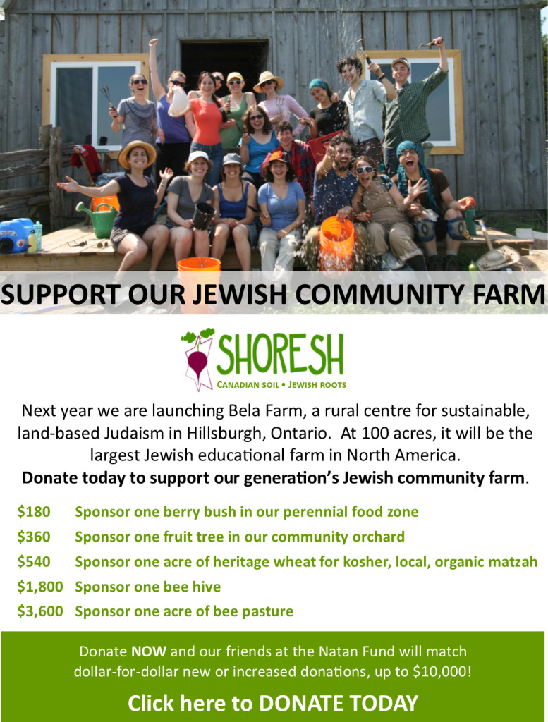 Shoresh Chanukah Campaign Day 3