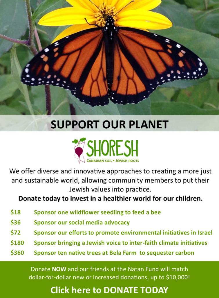 Shoresh Chanukah Campaign Day 8