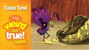 """[IMAGE DESCRIPTION: screenshot of a video with a play button in the centre. The left side of the screen has text that reads """"Taste Test NATIONAL GEOGRAPHIC KIDS Weird but True! Shorts"""". The left side shows a cartoon of an anthropomorphized purple butterfly with facial hear and glasses and looking at a large rotting fruit which is oozing sticky goo]"""